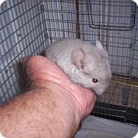 Adopt A Pet :: Tawny - Avondale, LA