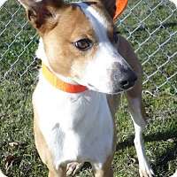 Adopt A Pet :: Lane + - Cleveland, MS
