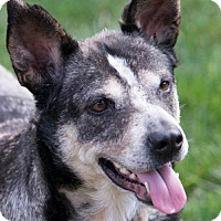 Adopt A Pet :: Molly - ADOPTION PENDING!! - Arlington, VA