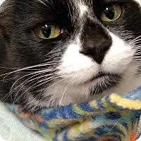Adopt A Pet :: Izzy - Ypsilanti, MI