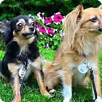 Adopt A Pet :: Petey and Daisy (Bonded Pair) - Ottawa, ON