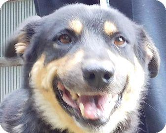 German Shepherd Dog/Chow Chow Mix Dog for adoption in MINNEAPOLIS, Kansas - Sal