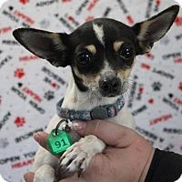 Adopt A Pet :: DANI - Gustine, CA