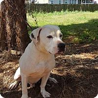 Adopt A Pet :: Melvin - Clarksville, TN