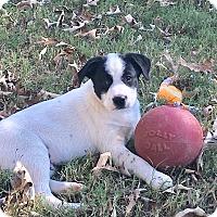 Adopt A Pet :: Gabe  (see video) - Trenton, NJ