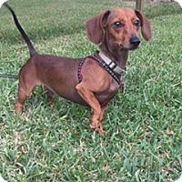 Adopt A Pet :: Benz - Davie, FL