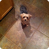 Adopt A Pet :: Quincy - Baton Rouge, LA