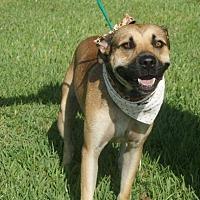 Adopt A Pet :: Nik - Wytheville, VA
