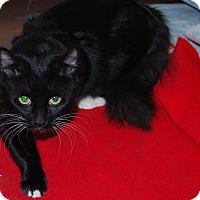 Adopt A Pet :: Misty - Exton, PA