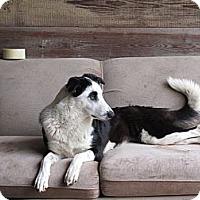 Adopt A Pet :: Kali - Austin, TX
