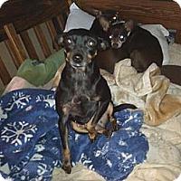 Adopt A Pet :: Jelly Bean - Soooo Cute! - Quentin, PA