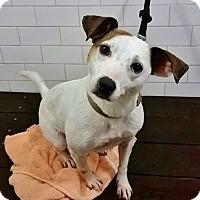 Adopt A Pet :: Paola - Brooklyn, NY