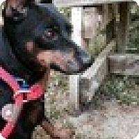 Adopt A Pet :: Diesel - Malaga, NJ