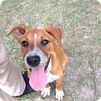 Adopt A Pet :: Penelope - Shelter Island, NY