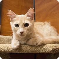 Adopt A Pet :: Curry - Savannah, GA