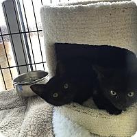 Adopt A Pet :: Peanut - Horsham, PA