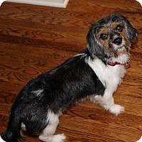 Adopt A Pet :: Buttons - Alpharetta, GA