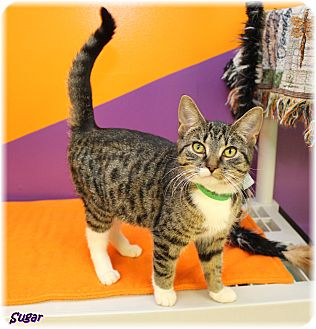 Welland Cat Adoption