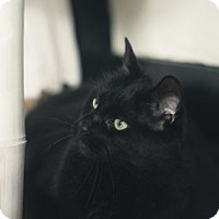 Adopt A Pet :: Snorlax - Toronto, ON