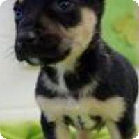 Adopt A Pet :: Aggies - Barnegat, NJ