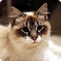 Adopt A Pet :: Princess - Richmond, VA