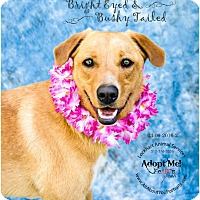 Adopt A Pet :: Ginger - West Hartford, CT