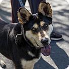 Adopt A Pet :: Nikita