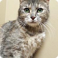 Adopt A Pet :: Gracie - Shorewood, IL