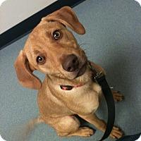 Adopt A Pet :: Grace - Killian, LA