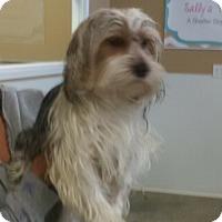 Adopt A Pet :: Marcus - Thousand Oaks, CA