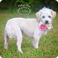 Adopt A Pet :: Wiri - Fort Valley, GA