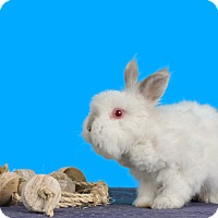 Adopt A Pet :: Anastasia - Marietta, GA