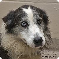 Adopt A Pet :: Skipper - Troy, OH