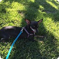 Adopt A Pet :: GiGi - Valencia, CA