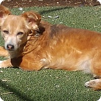 Adopt A Pet :: Fiona - Henderson, NV