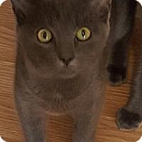 Adopt A Pet :: Prince Charles - Tampa, FL