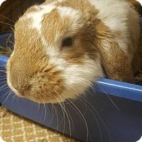 Adopt A Pet :: Leopold - Holbrook, NY