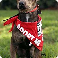Adopt A Pet :: Fleetwood - San Diego, CA