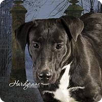 Adopt A Pet :: Jill - Clarksville, AR