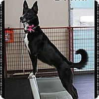 Adopt A Pet :: Beka - Rockwall, TX