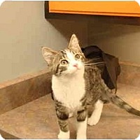 Adopt A Pet :: Gideon - Muncie, IN