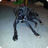 Adopt A Pet :: Baxter! - Hancock, MI
