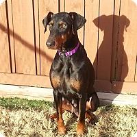 Adopt A Pet :: Morgan - Fort Worth, TX