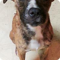 Adopt A Pet :: Jackson - Lebanon, CT