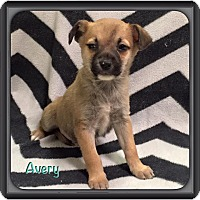 Adopt A Pet :: Avery - Harmony, Glocester, RI
