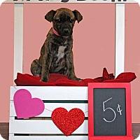 Adopt A Pet :: Violet - Waldorf, MD