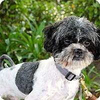 Adopt A Pet :: Linus - 11lbs - Los Angeles, CA