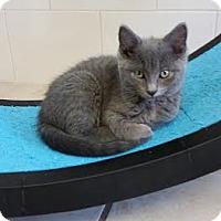 Adopt A Pet :: Baha - Chippewa Falls, WI