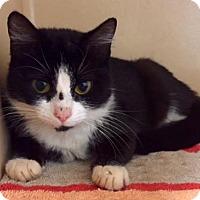 Adopt A Pet :: Alexis - Lincolnton, NC