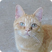 Adopt A Pet :: Jerry - MARENGO, IL